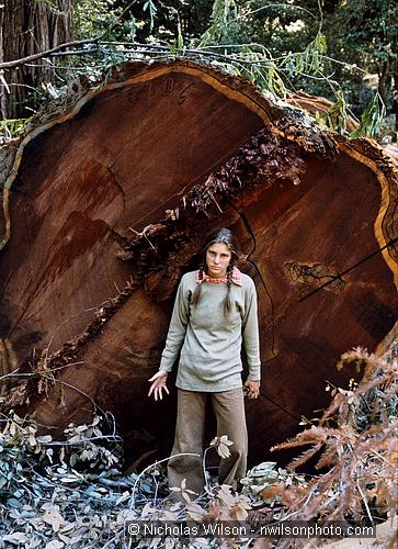 Meca Wawona with 10 ft. diameter redwood cut down by Georgia Pacific 1975